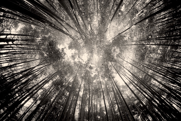 Image of trees circling into focal point-representation of memory and silence