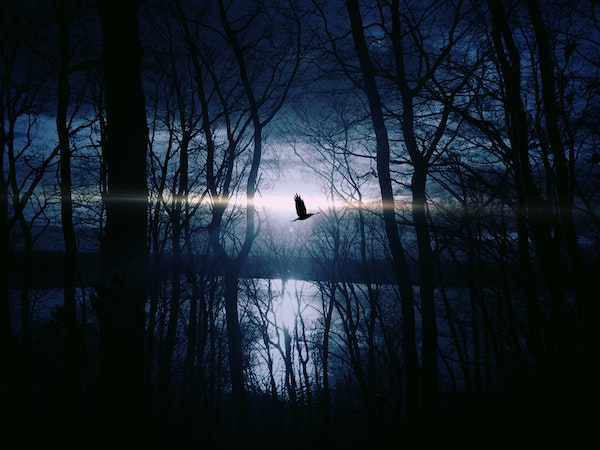 Image of eerie lake, forest and where I'd imagine seeing hungry ghosts
