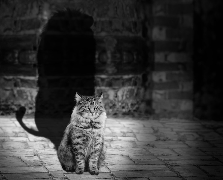 Image of cat casting shadow of a lion in black and white along brick wall-a self-care representation
