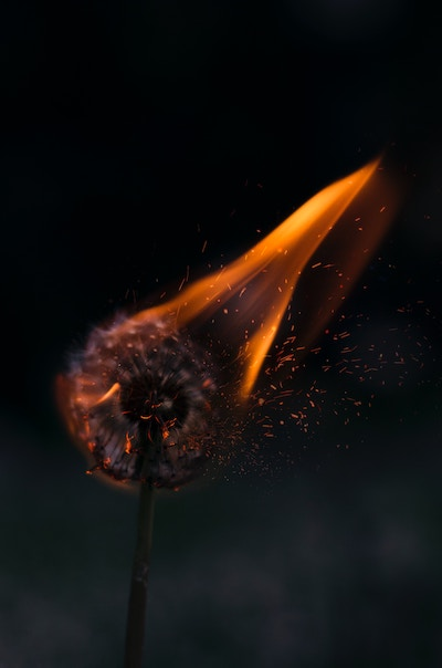 "Image of burning dandelion-for Stanza 1 of my poem ""the Town with No Moon"""