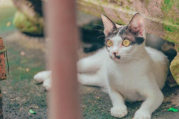 Image of shocked cat for lost in translation haiku
